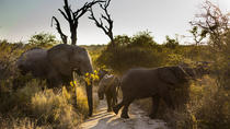 Big Five Afternoon Game Drive nel Kruger National Park, Parco nazionale di Kruger