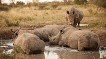 Full-Day Big Five Game Drive in Kruger National Park, Kruger National Park, Safaris