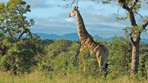 Hluhluwe Game Reserve Safari, Durban, Eco Tours