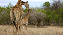 Kruger National Park Morning Game Drive, Kruger National Park, Multi-day Tours