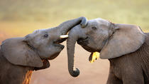 Port Elizabeth Shore Excursion: Addo Elephant National Park Tour, Port Elizabeth, Ports of Call ...