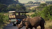 Richards Bay Shore Excursion: Hluhluwe Safari, KwaZulu-Natal, Ports of Call Tours
