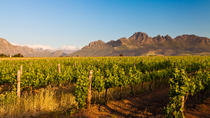 Stellenbosch Wine Tour from Cape Town, Cape Town, Day Trips