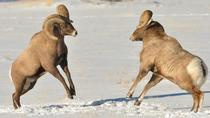 Winter Wildlife Museum and Sleigh Ride Experience, Grand Teton National Park, Nature & Wildlife
