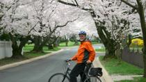 Viator Exclusive: Cherry Blossom Bike Tour in Washington DC, Washington DC, null