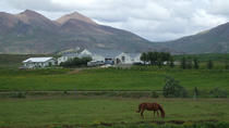Icelandic Horse Riding, Reykjavik, Horseback Riding