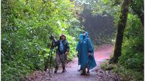Bird Watching Hike at San Gerardo Reserve, Monteverde, Nature & Wildlife