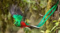 Bird Watching Tour in Monteverde, Monteverde, Nature & Wildlife
