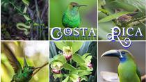 Monteverde Cloud Forest Preserve Nature WalK, Monteverde, Walking Tours