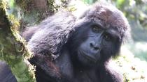 15-Day Tour of Uganda and Rwanda Wildlife, Kampala, Multi-day Tours