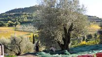 Tuscan Olive Oil Seminar, Florence, Food Tours
