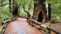 San Francisco Super Saver: Muir Woods en Wine Country met optionele gastronomische lunch, San ...