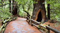 San Francisco Supersaver: Muir Woods en Wine Country met optionele gastronomische lunch, San ...