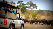 Half-Day Kruger National Park Safari from Komatipoort, Kruger National Park