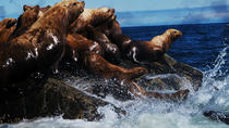 Seal Colony 3-Hour Boat Rental voor 5 tot 6 personen, Vancouver, Boat Rental