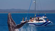 Blue Dolphin Small-Group Hervey Bay Whale Watching Cruise, Hervey Bay, Dolphin & Whale Watching