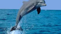 Dolphin Experience in Open Sea and South West Tour of Mauritius including Lunch, Port Louis, Swim...
