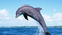 Full-Day Dolphin Watching Cruise in Mauritius, Port Louis, Dolphin & Whale Watching