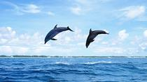 Full-Day Swimming With Dolphins And Casela Nature Park Tour in Mauritius, モーリシャス