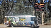 Gold Coast to Treetop Challenge and Thunderbird Park, Surfers Paradise, Day Trips