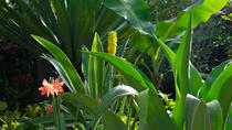 Barnaby's Hummingbird Garden with Ricks Cafe, Negril, Day Trips