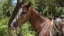 Rhodes Hall Horseback-Riding Tour with Snorkeling, Negril, Half-day Tours