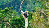 Son Tra Monkey Mountain Half Day Trek and Wildlife half day tour from Hoi An, Da Nang, Hiking &...