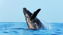 Best of Alaska Whale Watching Adventure, Juneau, Nature & Wildlife