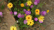 3-Day Wild Flowers Guided Tour from Cape Town, Cape Town