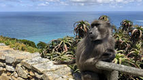 Cape Point, Penguins and Wine Tasting Guided Day Tour from Cape Town, Cape Town, Day Trips