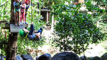 TreeTop Challenge Juniors, Gold Coast, Kid Friendly Tours & Activities