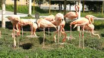 Private Full Day Tour to Harbin Beifang Forest Zoo and Optional Seafood Dinner, Harbin, Full-day...