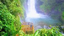 Day trip from San Jose to Doka Coffee Plantations & La Paz Waterfall Gardens, San Jose, Coffee & ...