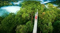 Day trip from San Jose to Monteverde Cloud Forest & Sky Adventure Park, San Jose, 4WD, ATV &...