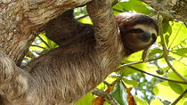 Exotic Landscapes of Costa Rica, San Jose, Multi-day Tours
