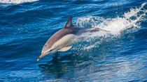 Dolphin Watching Tour and Güi Güi Beach, Canary Islands, Day Cruises