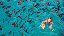 Bay of Sosua Catamaran Cruise and Snorkeling, Puerto Plata, Full-day Tours