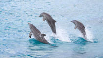 Half-Day Dolphin Island Tour from Punta Cana, Punta Cana, Night Cruises