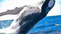 Whales & Wine, Cape Town, Cultural Tours