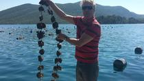 3-4h STON, OYSTERS and WINE TOUR FROM DUBROVNIK, Dubrovnik, Wine Tasting & Winery Tours