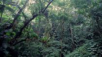 Rio de Janeiro Botanical Garden and Tijuca Rainforest Eco-Tour, Rio de Janeiro, Hiking & Camping