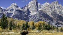Half Day Group Sunset Wildlife Safari, Jackson Hole, Cultural Tours