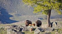 Yellowstone National Park Private Tour, ジャクソンホール