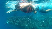 Exciting Swim with Whale Sharks Tour, Cancun, Dolphin & Whale Watching