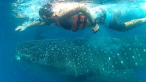 Swim with Whale Sharks in Cancun, Cancun