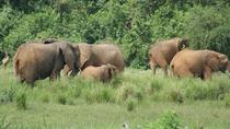 Experience Murchison Falls 3 days safari, Kampala, Private Sightseeing Tours
