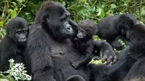 Gorilla trekking - 3 days, Kampala, Private Sightseeing Tours