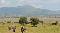 Kidepo safari - 5 days, Kampala, Private Sightseeing Tours