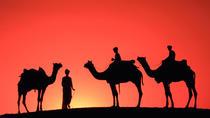 Sunset Camel Ride Tour in Marrakech Palms Grove Area, Marrakech, Nature & Wildlife