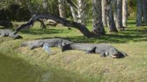 Everglades Tour Through The Big Cypress National Preserve, Everglades National Park, Eco Tours